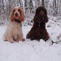 Pose im Schnee