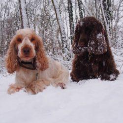 Mädels im Schnee